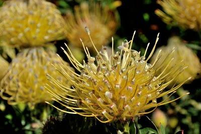 Kirstenbosch Botanical Garden, South Africa