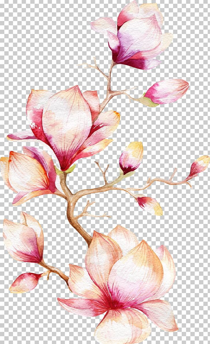 Magnolia Flower Png : magnolia, flower, Watercolor, Painting, Magnolia, Flower, Branch,, Cartoon,, Design,, Drawing,, Floral, Design, Wreath, Watercolor,, Paintings,, Branch, Drawing