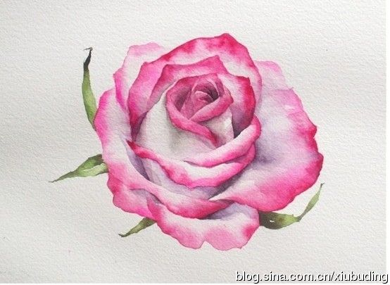 25 Best Ideas About Watercolor Rose On Pinterest Simple