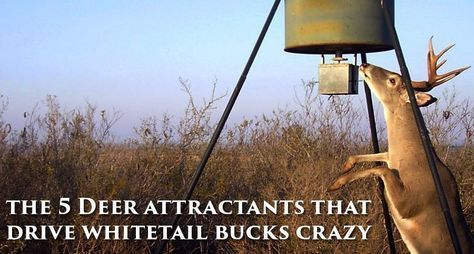 The 5 Deer Attractants That Drive Whitetail Bucks Crazy - Wide Open Spaces