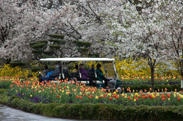 13 Best Images About Leu Gardens Weddings On Pinterest: 17 Best Images About Cherry Blossom Trees On Pinterest