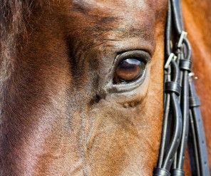 Christine Wels door trap van paard overleden