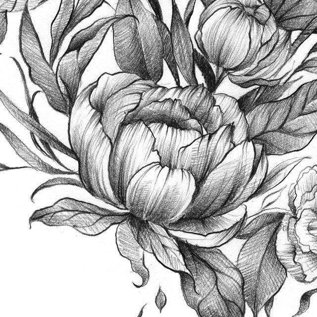 мятного цветы фэнтези карандашом картинки смысл
