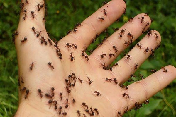 hangyák ellenei házi spray