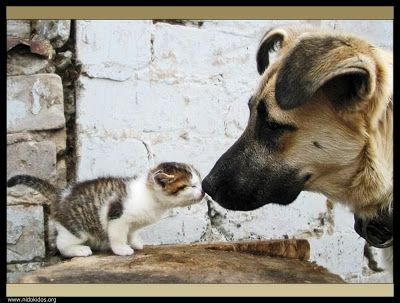 To jest to, co nazywa przyjaźń!
