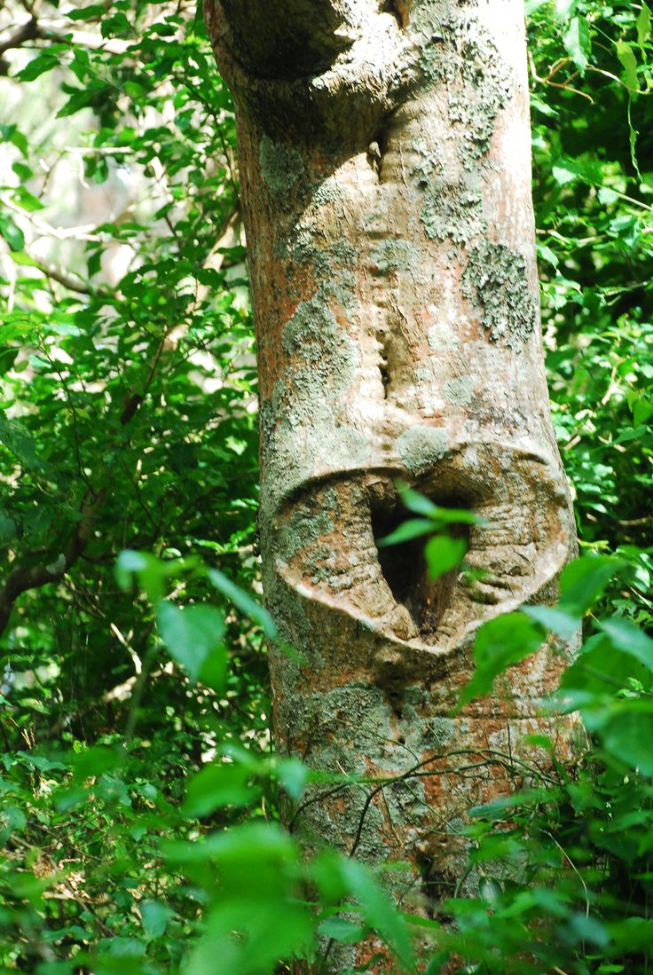 Natural heart in a tree while walking along the boardwalk at Sibuya Game Reserve Forest Camp reached via boat along the Kariega River from Kenton on Sea, Eastern Cape, South Africa www.sibuya.co.za
