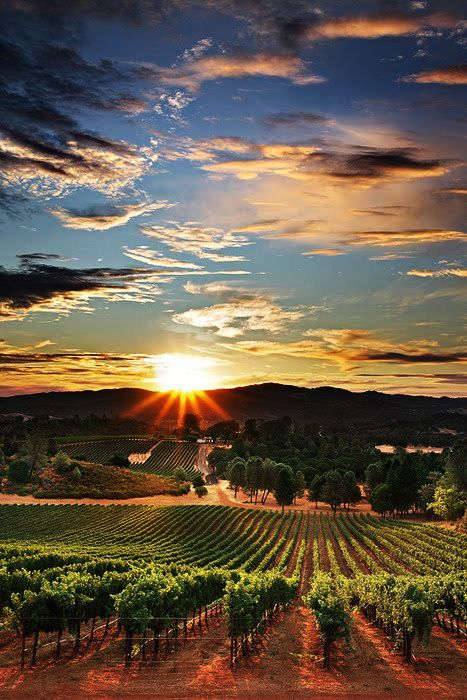 Wine Country, CA.