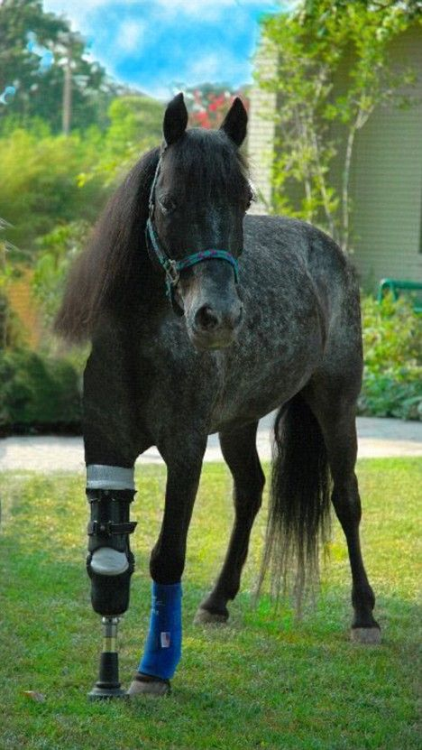 Meet Molly, the three-legged pony who is giving hope to New Orleans three years after Katrina