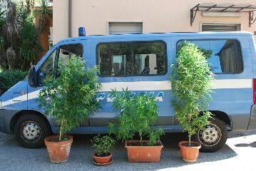 Pescara,coltivava piante di marijuana sul terrazzo:denunciato un sessantatreenne