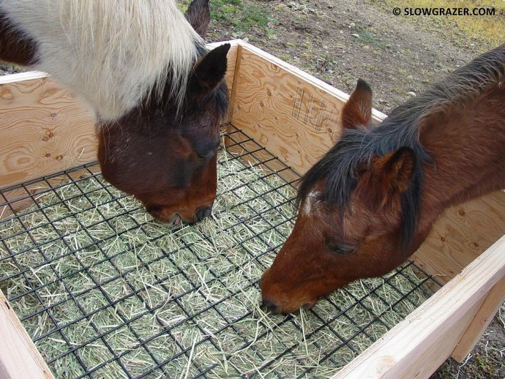 Five Common Mistakes Made When Feeding A Horse - so much good info here, including the daily calorie requirements of horses in different situations.
