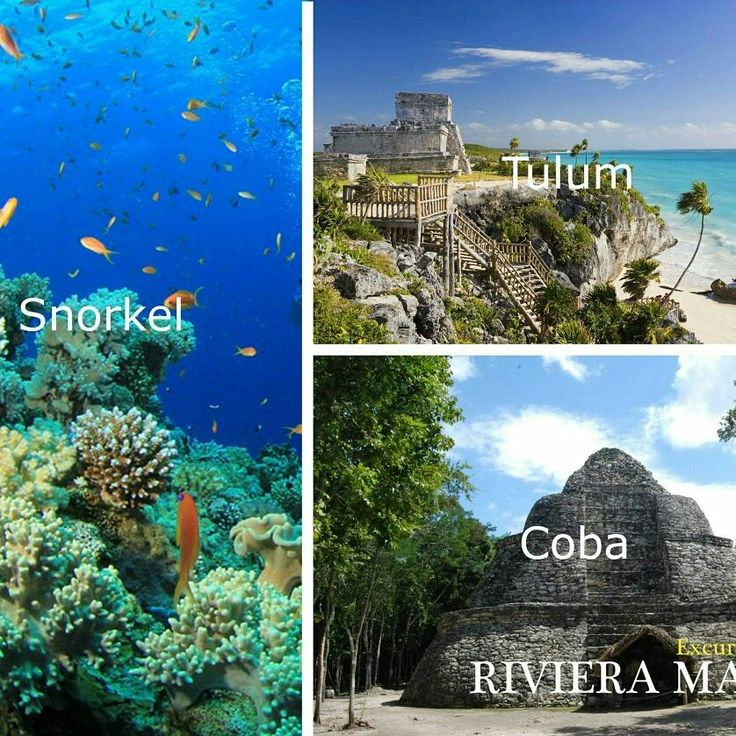 Tres apasionantes lugares que debes conocer en la Riviera Maya: Tulum + Coba, dos ciudades mayas en ruinas y un tour de snorkel que no te puedes perder.  Reserva ahora ingresando en nuestra web y encuentra toda la información que necesitas. ____________________________  Three exciting places to visit in the Riviera Maya: Tulum + Coba, two Mayan cities in ruins and a snorkeling tour that you can not miss.  Book now by entering our website and find all the information you need…