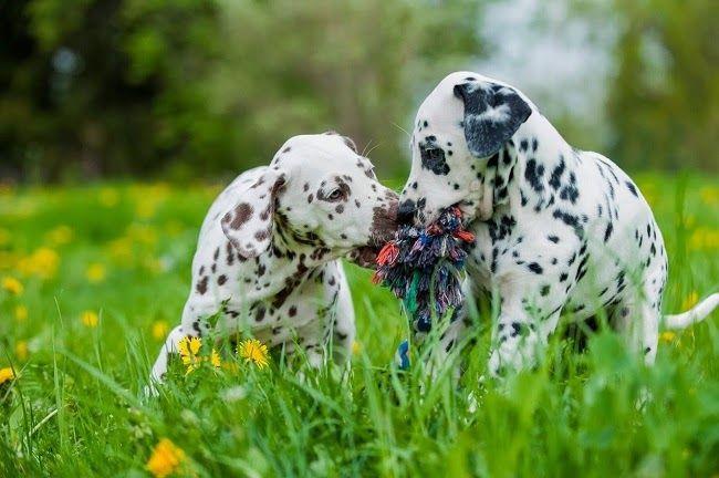 Niezbędne nienasycone kwasy tłuszczowe w diecie psa