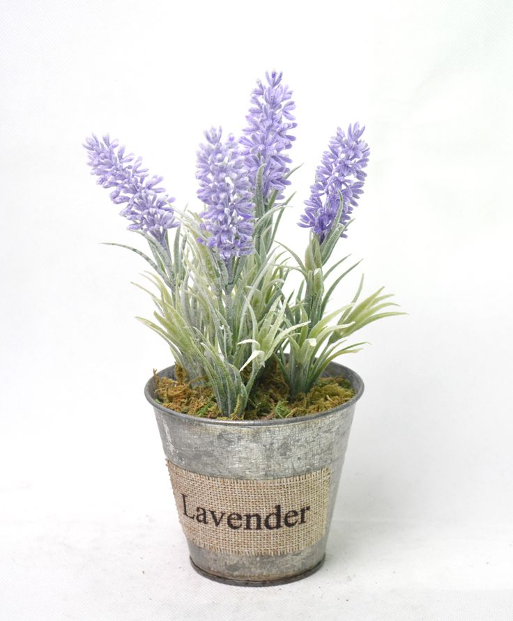 classical lavendar in tin pot , really hot in our fatory