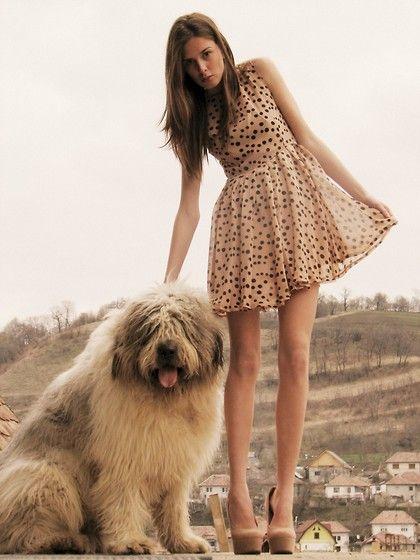 : Little Dresses, Sheep Dogs, Polka Dots Dresses, Polkadot, Cute Dresses, Old English Sheepdog, The Dresses, Cute Dogs, Big Dogs