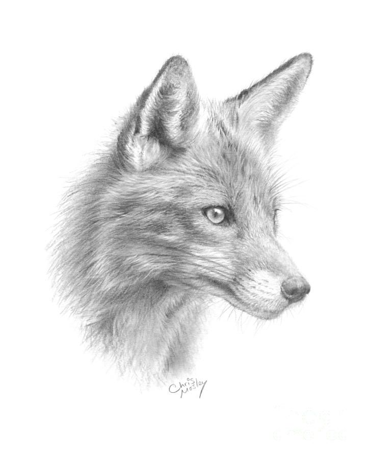 521 best GRAPHITE PENCIL DRAWINGS OF FOX images on Pinterest Fox - best of coloring page of a red fox