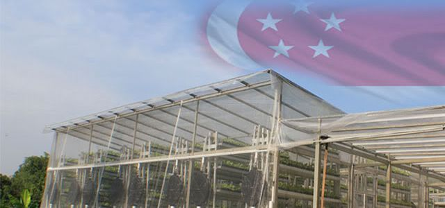 World's first low-water, low-energy vertical farm opens in Singapore