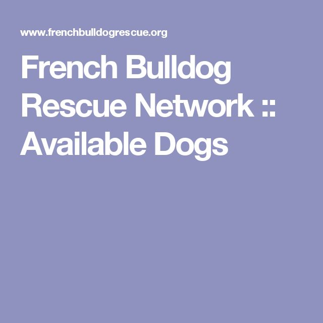 French Bulldog Rescue Network :: Available Dogs