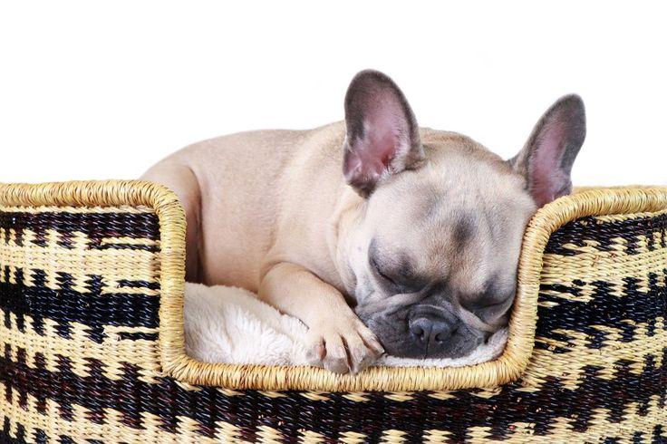 """Design Dua Bear Dog Bed """"Cross"""""""