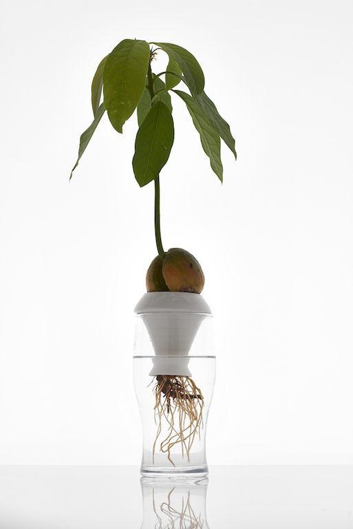 PLANTATION is a series of porcelain elements designed for growing herbs and ornamental plants using the principles of hydroponics. Thanks to the use of only water and no soil, this method allows observing the growing process of both the stems and the roots of plants.