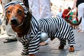 hasta perros hay ladrones