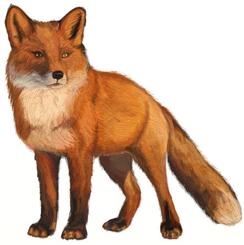 312 best FOXES- DRAWINGS AND PAINTINGS OF FOX images on ...