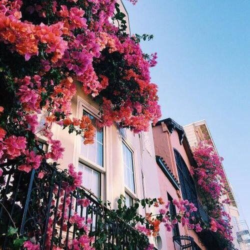 flowers, pink, and house -kuva