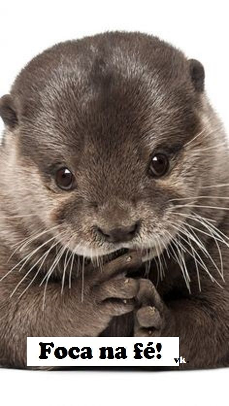47 Best Otters Images On Pinterest Otters Otter And