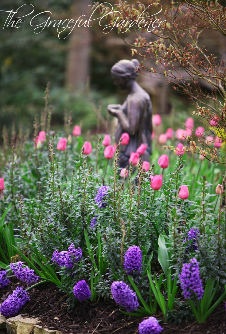 89 best bulbs images on pinterest flowers spring bulbs and