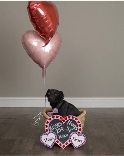 LOST DOG: 05/27/2017 - Paradise, Nevada, NV, United States. Ref#: L30798 - #CritterAlert #LostPet #LostDog #MissingDog