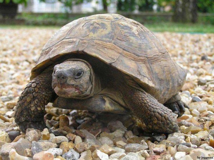 En İlginç 7 Kaplumbağa Türü