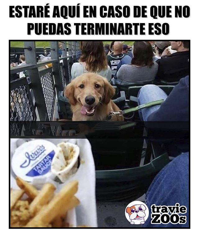 Untitled Imagenes Divertidas De Animales Memes Graciosos Perros Graciosos