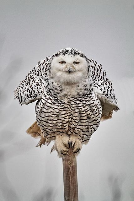 Happy owl....adorable!