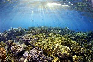 The Great Barrier Reef Under Threat, rapport commandé par le WWF, indique que l'industrialisation sauvage le long de la Grande Barrière de corail pourrait gravement endommager cet écosystème, qui...  http://www.wwf.fr/vous_informer/?4140/La-Grande-Barriere-de-corail-un-futur-depotoir
