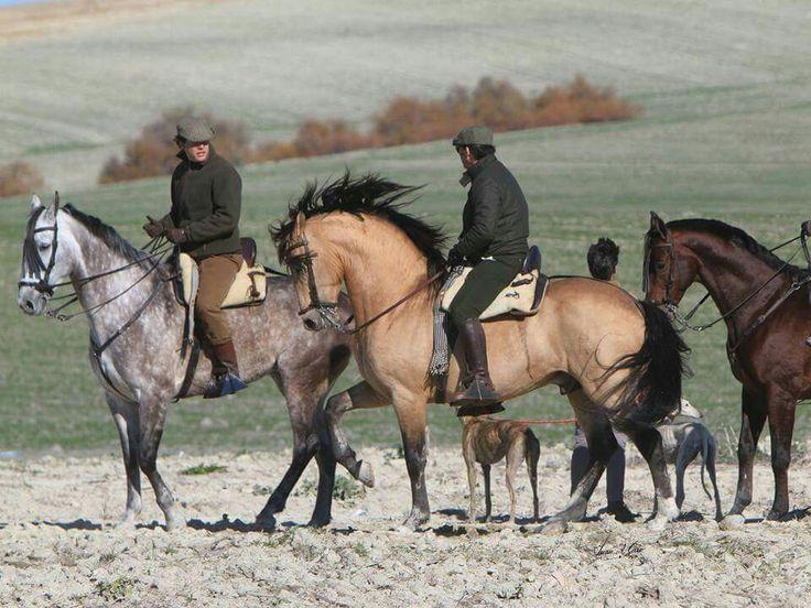 Hechicero AP. yeguada agrícola Peralta.