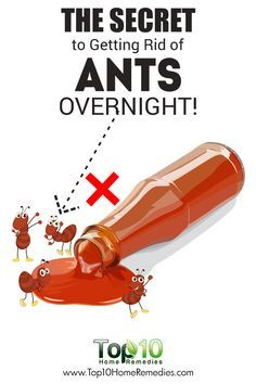 The Secret to Getting Rid of Ants Fast and Naturally Overnight!