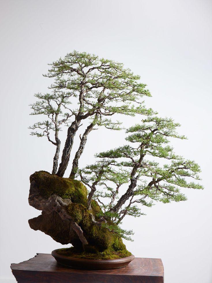 Meet the Man Who Grows Mini Million-Dollar Trees