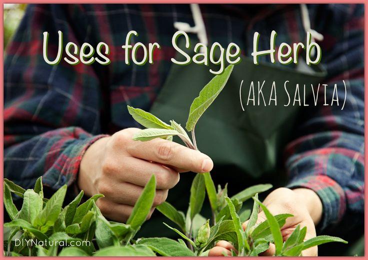 Natural Uses For Sage Herb (AKA Salvia Plant) ~ via www.diynatural.com/sage-herb-salvia-plant-uses/