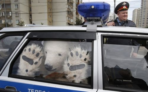 """Best Greenpeace protest photo you'll see today:""""A Greenpeace activist, dressed as a polar bear, sits inside a police car after being detained outside Gazprom's headquarters in Moscow, Russia, on Sept. 5, 2012. Russian and international environmentalists are protesting against Gazprom's plans to pioneer oil drilling in the Arctic.""""(photo byMisha Japaridze/AP; ht@breaking)"""