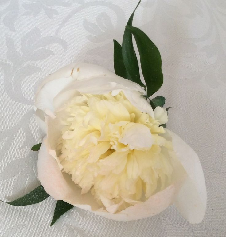 Peony button hole by Cathey's flowers