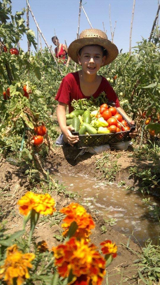 The #joy of #picking #vegetables, #good, #fresh #romanian vegetables!
