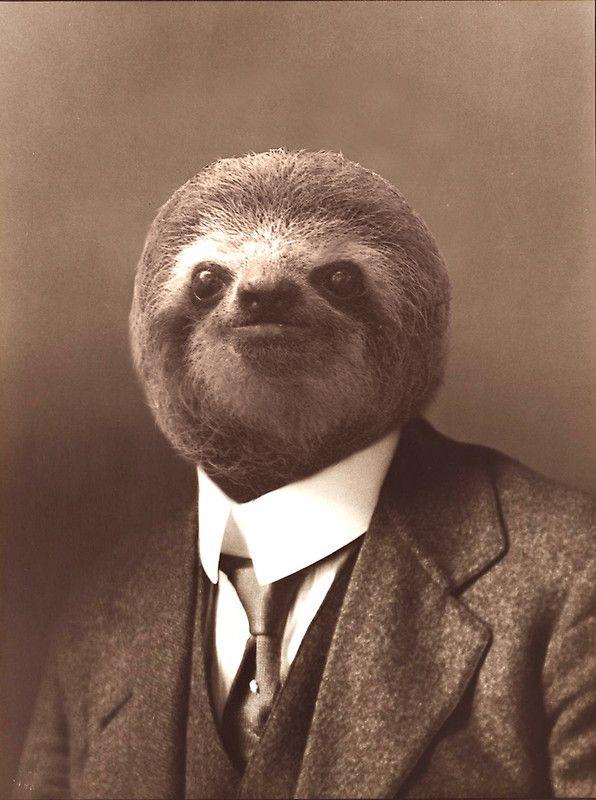 Gentleman Sloth