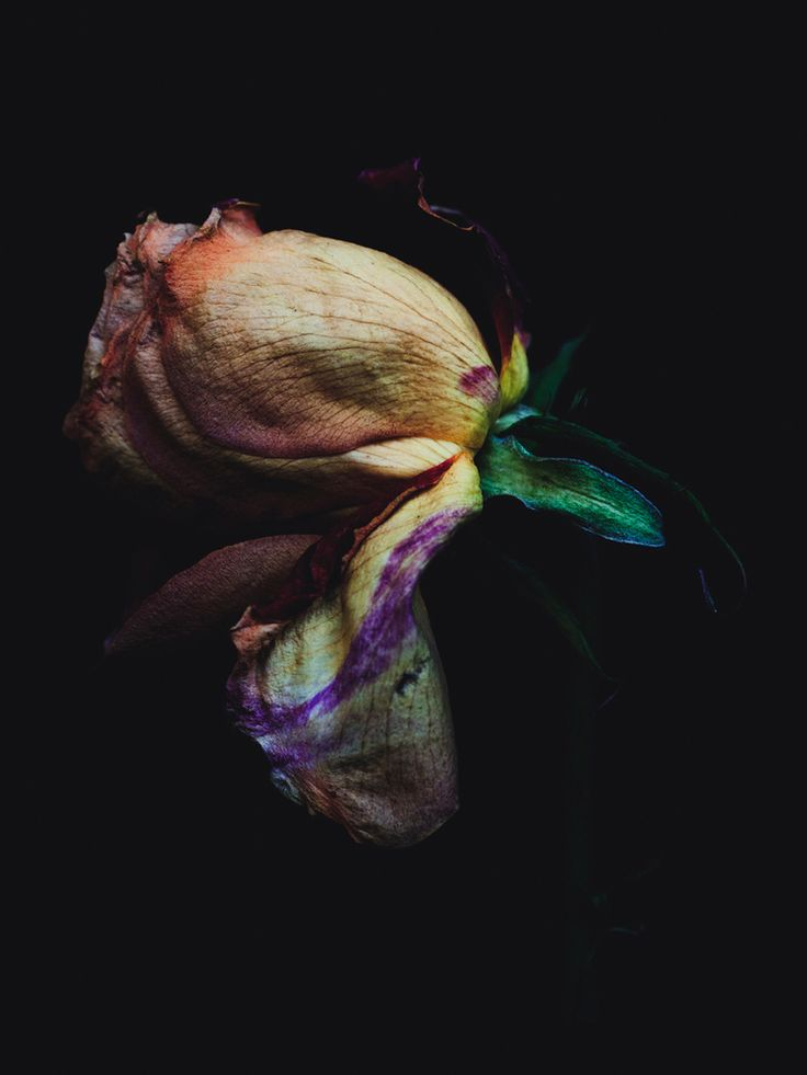 Decaying flowers by Billy Kidd