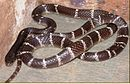 http://ift.tt/2s1DvkY that only two types of snake are known to be poisonous: Southeast Asian snakes of the genus Rhabdophis and certain garter snakes in Oregon that eat rough-skinned newts.