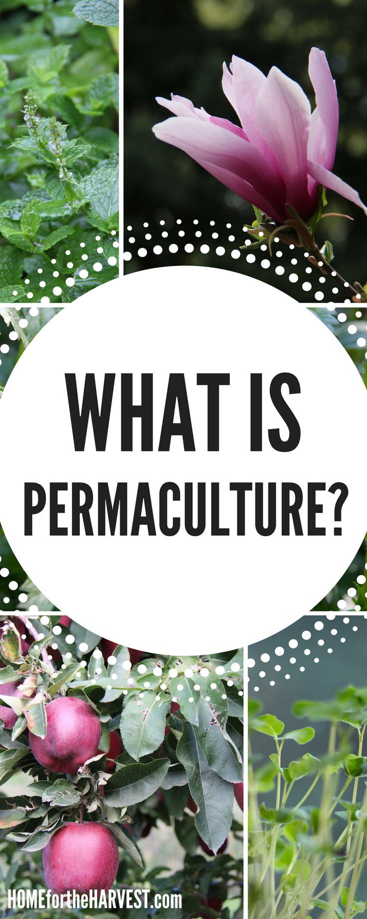 Wondering what permaculture is? Is it just organic gardening...or is there something more? Check out this post to understand what permaculture is and how to use it in your organic garden!