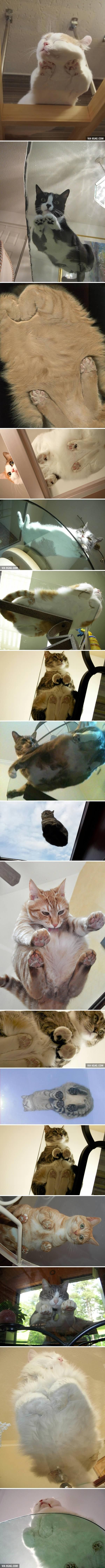 17 Pictures Of Cats On Glass... Not sure why, but this never seems to get old! xD
