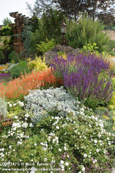 17 Best Images About Plant Combinations On Pinterest 400 x 300
