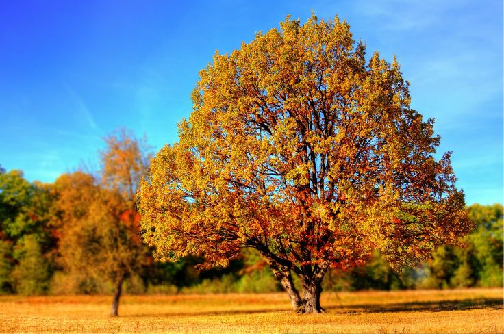 6 Outstanding Fall Cleanup Tips - http://blog.storageseeker.com/main/6-outstanding-fall-cleanup-tips