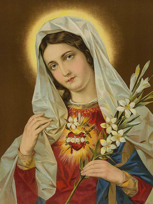 Sacred Heart Of The Virgin Mary | Di maria, Maria mãe de jesus, Virgem maria