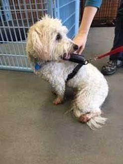 Dumfries, VA - Mixed Breed (Medium). Meet Coulson, a dog for adoption. http://www.adoptapet.com/pet/19308779-dumfries-virginia-mixed-breed-medium