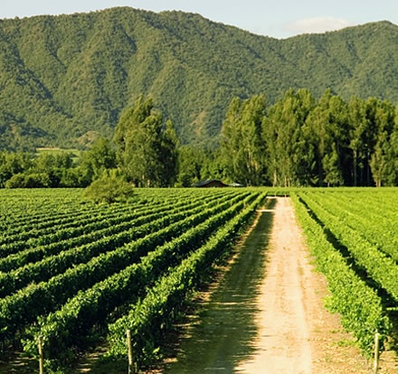 Chilean Wineries